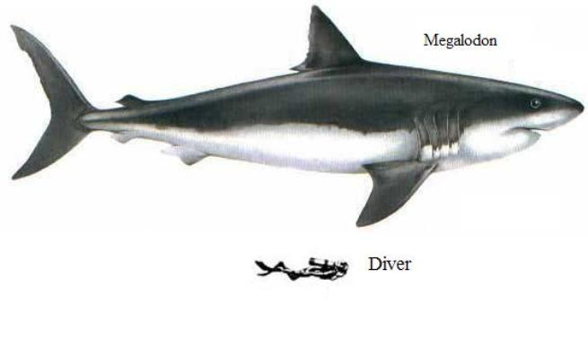 Size comparison between Megalodon and diver.