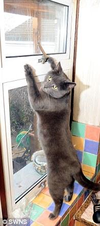 Кот помог спасти дом своих хозяев от пожара